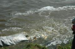 Lehalászás és telepítés