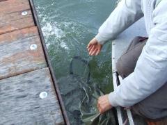 Nagy halak és különleges fogások a Duna-ágon